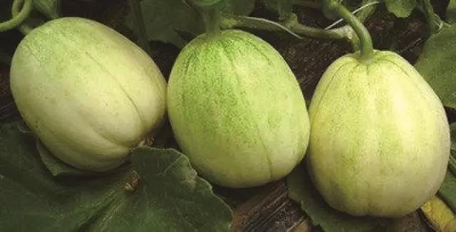 这种增甜香瓜谁敢吃
