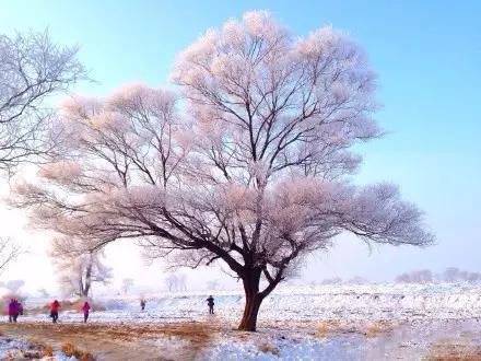 这才是国内最美的冬天 只有1%的人敢去!2