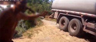 司机鸣笛被要求赔偿2万 称导致家畜难产