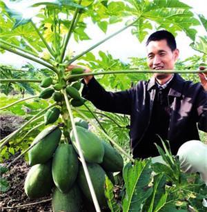 厉害!华南农大教授让热带水果在开州开花结果