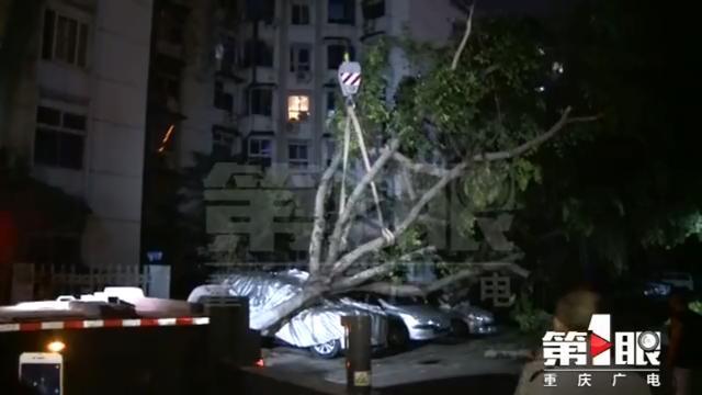 昨天一场暴雨 江北洋河一带行道树倾倒压车