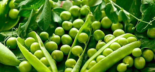 豌豆护眼效果佳 好吃还助提高免疫力