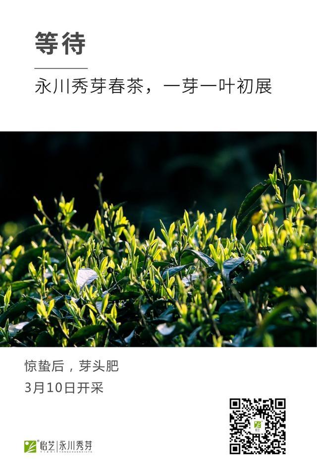 重庆·永川秀芽春茶上市