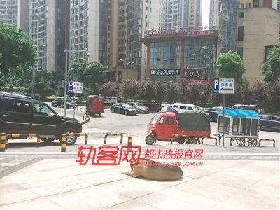 主人搬去国外定居 重庆忠犬数年如一日苦守小区