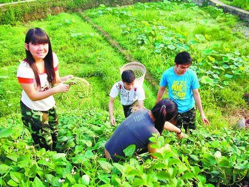 香港大学生来农村学种玉米