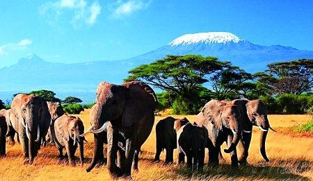 """去非洲看动物去欧洲避暑 重庆推""""白领专线"""""""