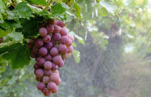 含这元素的水果最抗癌 防癌水果有哪几种