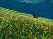 户外大神赴圣境九顶山 徜徉百亩花海