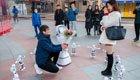 程序员携机器人求婚被拒