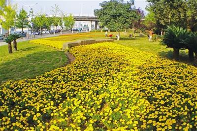 万安大桥南桥头花卉相继开放 提升城市形象