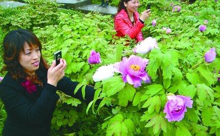 垫江农民让30万美食人均增百元韩家川牡丹图片