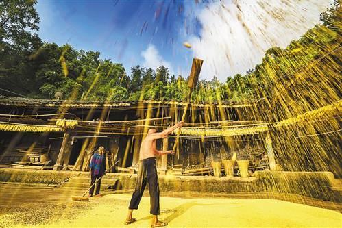 丰都:村民喜获丰收 院坝扬晒稻谷