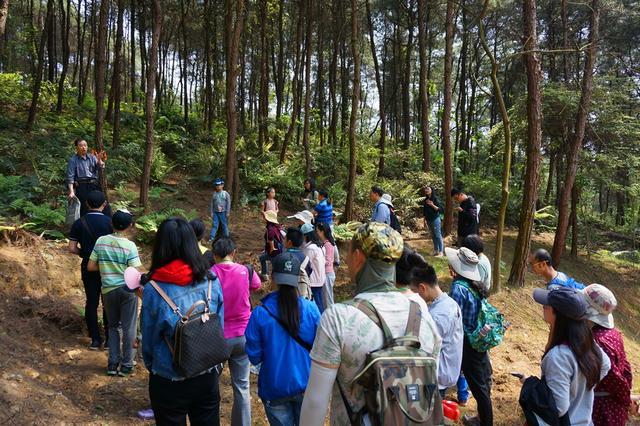 近百人周末走进自然 体验森林探秘和森林瑜伽