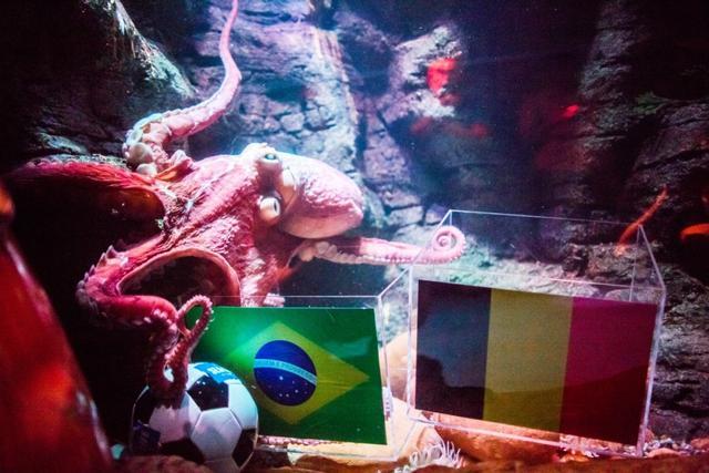 世界杯蝴蝶预测v蝴蝶重庆的章鱼鲲鲲及格过线颜料画动物图片