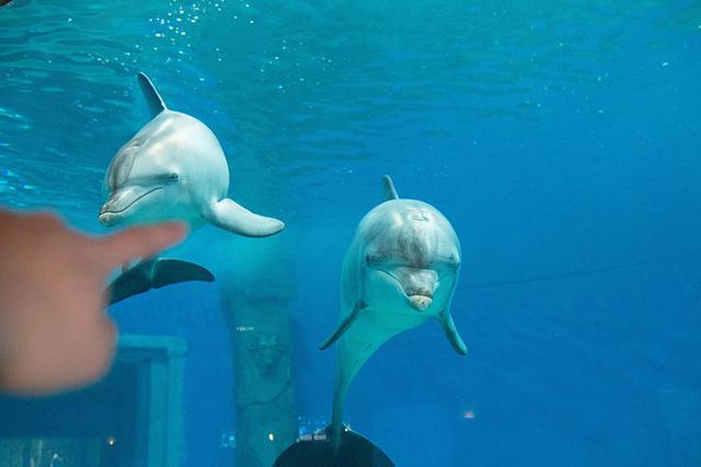 春节去汉海看海豚赏海底舞狮 海豚亲子票低至6折