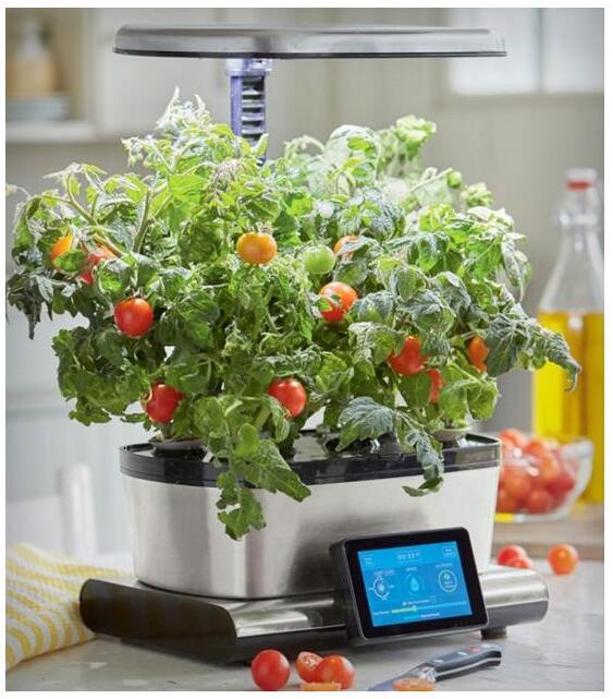 室内可以自己种菜吃 纯天然无污染还新鲜