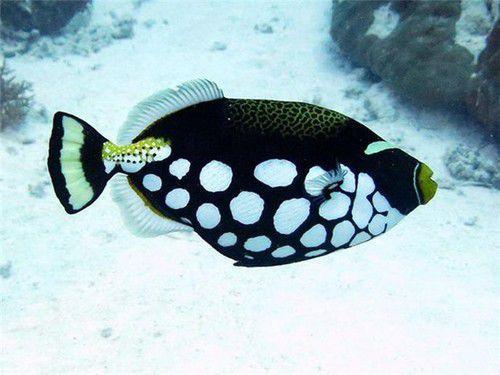 只为那片深蓝 在帕劳化作一尾自由的鱼