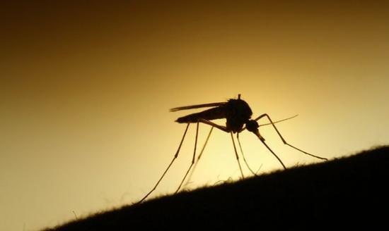 蚊虫叮咬一身包如何应对?