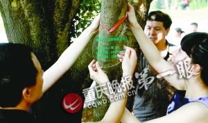 低碳生活:认养一棵树 让它陪伴儿女成长(图)