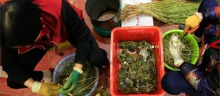 捆蟹工每日捆上千只蟹 月工资过万