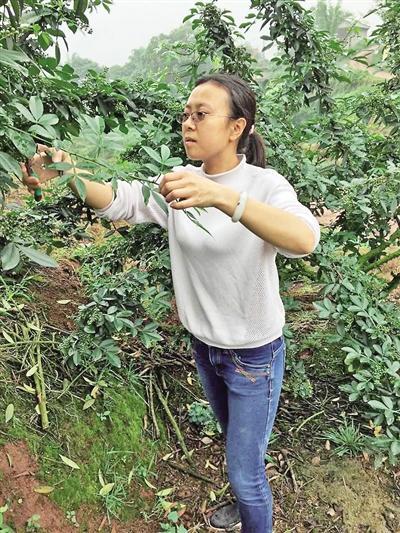 美女辞职回乡种植花椒 今年销售额可达50万