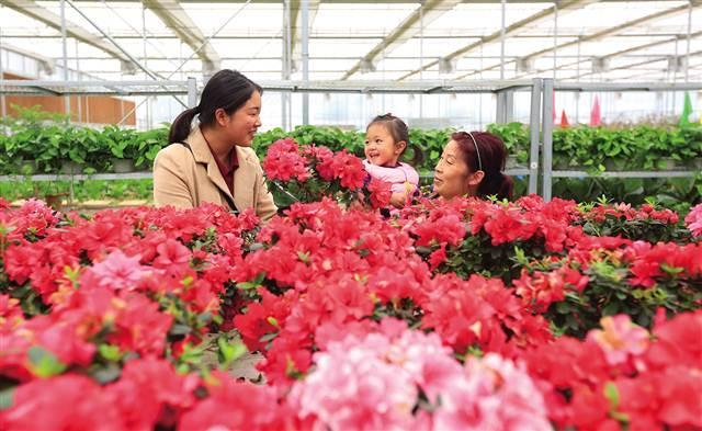 北碚:乡村振兴战略进行时 大力发展特色效益农业