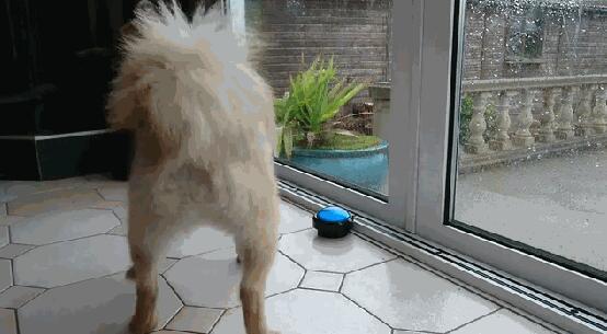 狗狗想要便便了 这款沟通器让铲屎官更合格