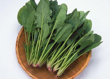 绿色菠菜美颜还减肥 菠菜减肥食谱推荐