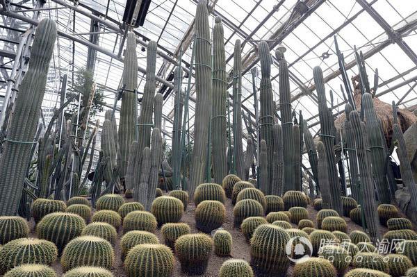 南山植物园温室展览馆等您取名 最高奖金达1万元