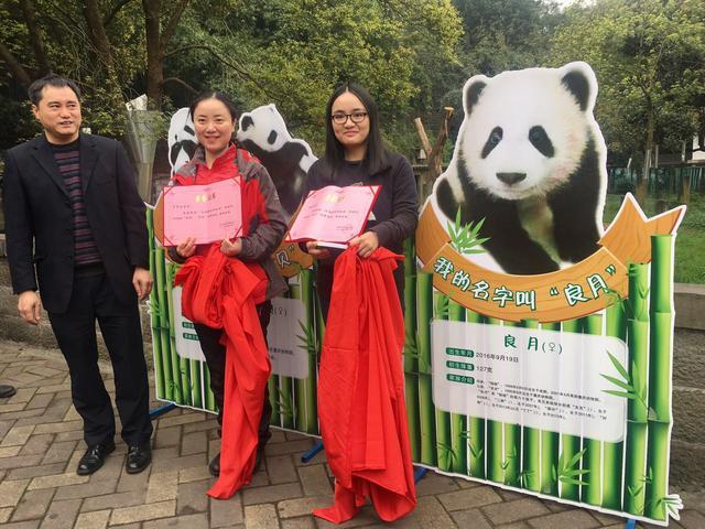 重庆动物园三只熊猫宝宝有名字了!快来看看它们叫啥