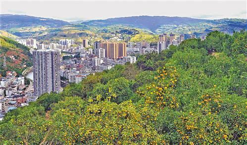石柱大力治理城郊荒坡 荒山变果园