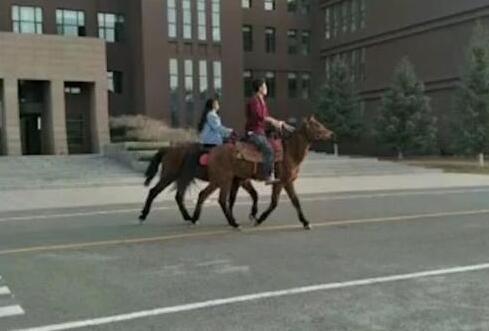 内蒙古大学情侣校园骑马