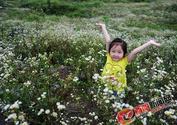 酉阳栗儿子坪整顿地花海鲜花怒放 夏季气候温在30℃下(图)