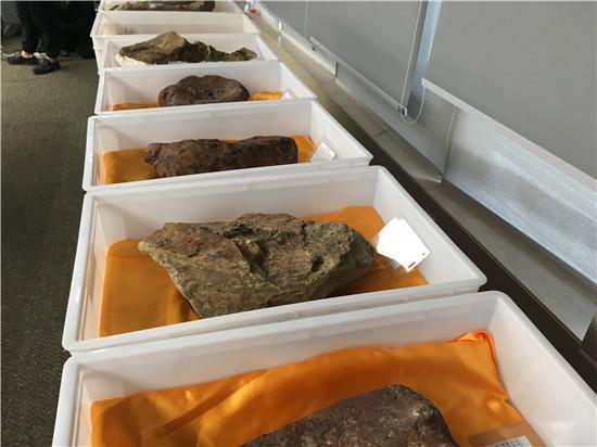 重庆云阳发现世界级恐龙化石群 形成长150米化石墙