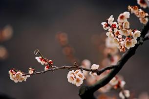 重庆人的腊月习俗 你知道吗?