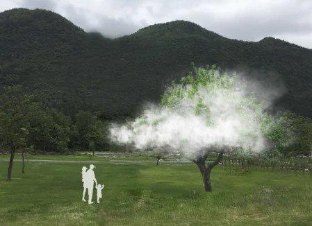 木从石出?重庆酉阳竟有棵神秘的树