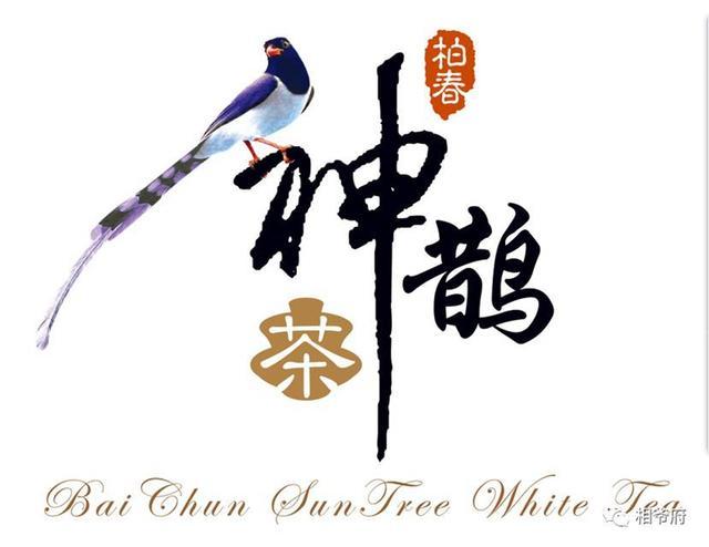 """中国""""神鹊茶""""落户重庆 高品质好茶走向全国"""
