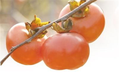 吃柿子喝酸奶会中毒?医生辟谣:或引起腹痛等