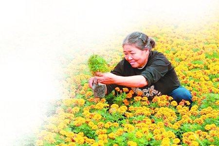 鲜花多从外地来 重庆花卉何时香更浓?