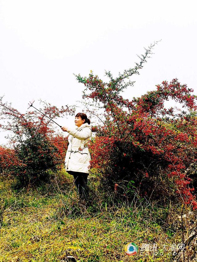渝正西北边旅游结盟赴8区县 剜刨多条稀品旅游线路