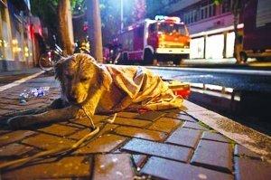 上海火灾现场忠心小狗不吃不喝等主人出现(图)