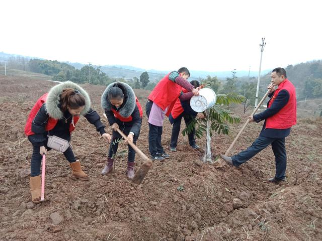 厉害了!重庆江津今年计划营造林15.5万亩