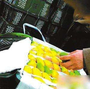 芒果黄澄澄味道却发涩 原是低毒农药催熟的