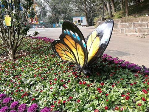 这个春节 万州多场花事等着市民来欣赏