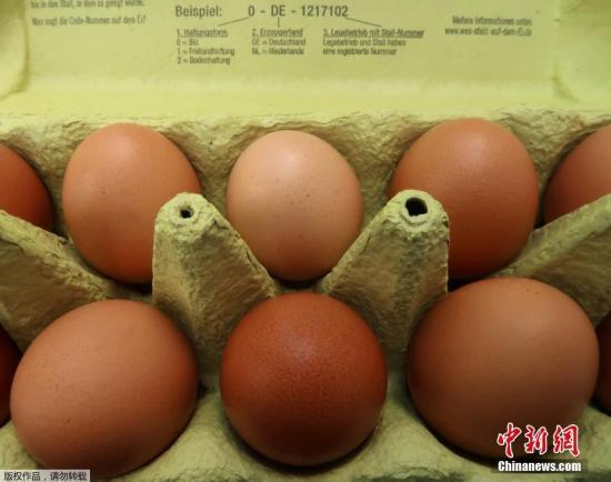 荷兰当局早前在鸡只的粪便、血液及蛋中,验出高浓度的杀虫药芬普尼(fipronil)。芬普尼主要用作杀灭动物身上的扁虱、跳蚤和蜱虫,严禁在作为人类食用的饲养禽畜中使用。(资料图)