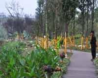 景观示范区