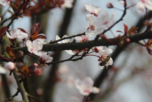 丰都:春暖花开 赏花正当时