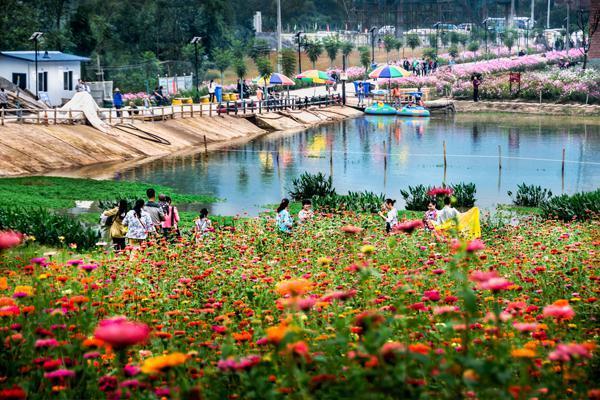 亲子游乐、观花采果 就来万州石桥水乡湿地公园