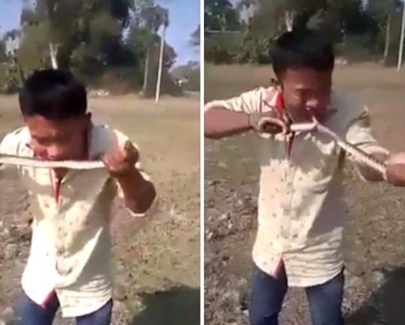 男子用牙剥蛇皮生吃野蛇 画面血腥