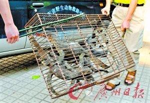 野味馆售卖珍稀动物 巨蜥穿山甲装满一车(图)